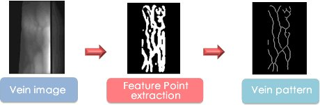 vein pattern extraction algorithm
